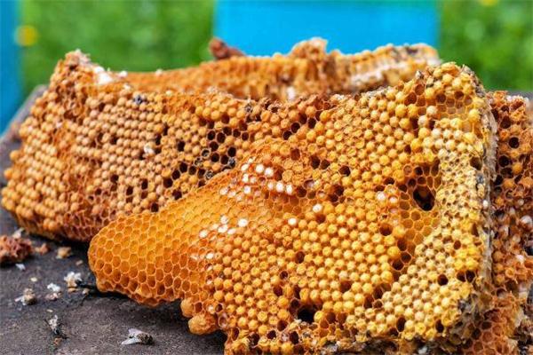 蜂胶适合什么人吃 孕妇可以吃蜂胶吗