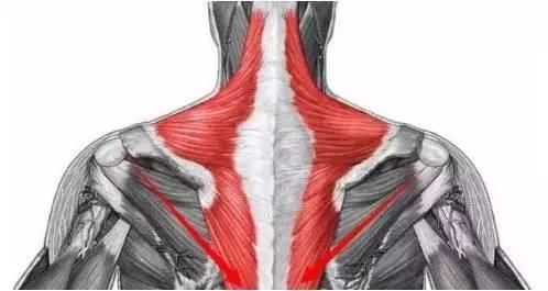 斜方肌怎么变小 斜方肌变小的方法