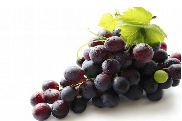 葡萄减肥法一天吃多少图片