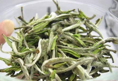 白牡丹茶要泡多久 怎么挑选白牡丹茶