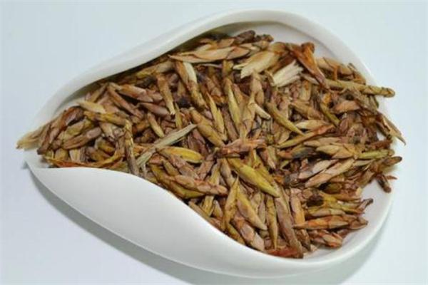 老鹰茶是什么茶 老鹰茶是红茶还是绿茶