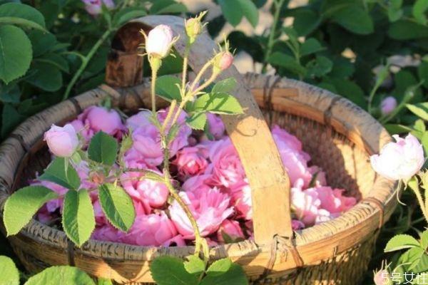 鲜花纯露家庭制作方法图片