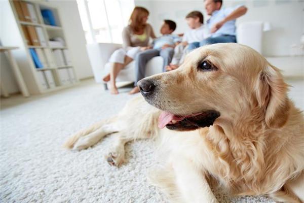 情侣间要一起养宠物吗 情侣养宠物的注意事项