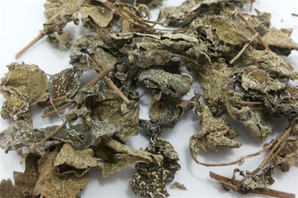 溪黄茶的功效与作用 溪黄茶可以长期喝吗