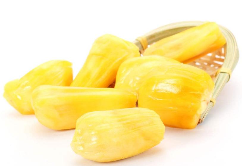菠萝蜜硬硬的还能吃吗 菠萝蜜半生不熟的可以吃吗