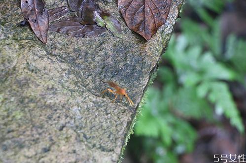 怎么判断体内有无蜱虫 蜱虫会寄生在人身上吗