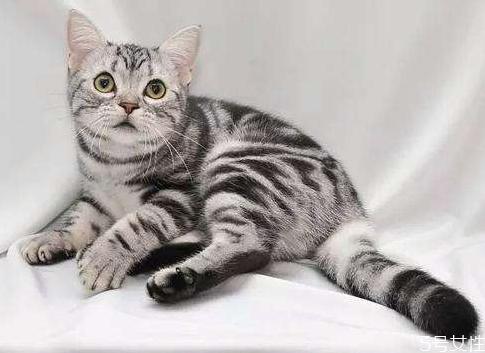 猫什么时候绝育最好 公猫最佳绝育时间