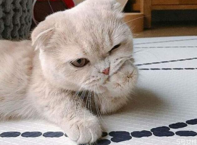 小猫养多久才认主人 猫咪认定主人的表现
