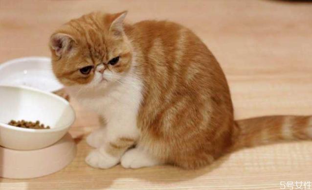 养公猫好还是母猫好 新手养公猫还是母猫