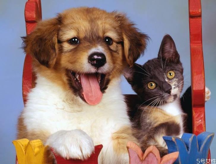 养猫一个月多少钱 养猫费钱还是养狗费钱