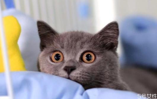 猫养两只还是一只科学 养一公一母两只猫注意事项