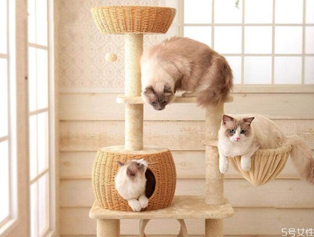 养猫一定要买猫爬架吗 猫爬架适合几个月的猫