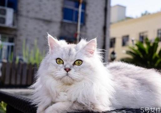 适合女性饲养的五种宠物猫_什么宠物猫好养又便宜