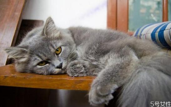 怎么和猫培养感情 快速让猫信任新主人