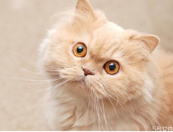 惩罚猫的方法有哪些图片