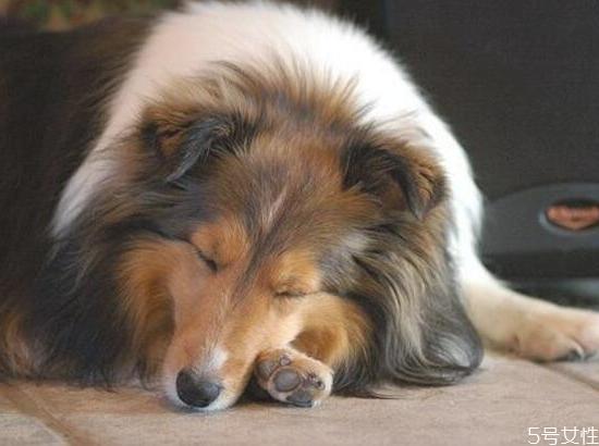 狗狗呕吐是怎么回事 狗狗呕吐注意事项