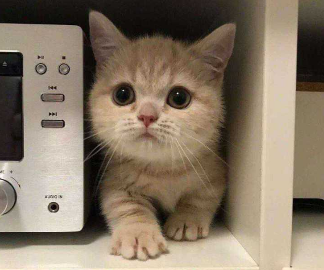猫用打狂犬疫苗吗 被猫抓出血了怎么处理