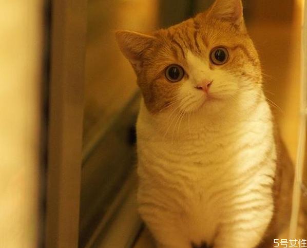 怎样知道猫咪是否怀孕图片
