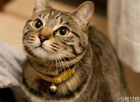如何确定猫是否怀孕图片