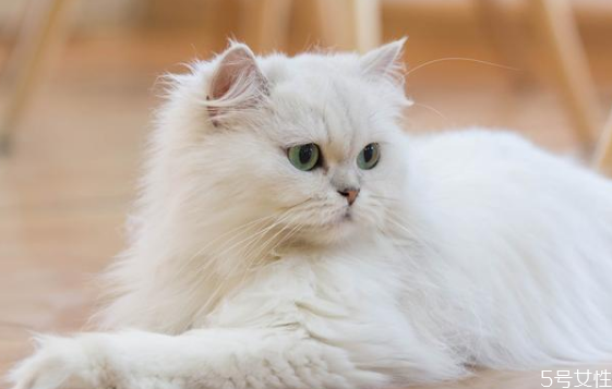 什么猫既温顺又不掉毛 掉毛严重的猫排行榜