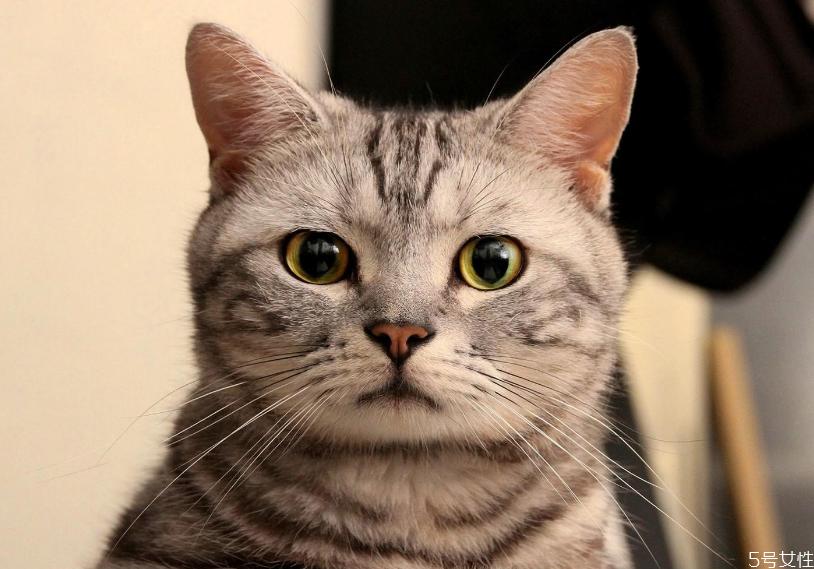 哪个快递可以寄活体宠物 顺丰快递猫咪要多少钱