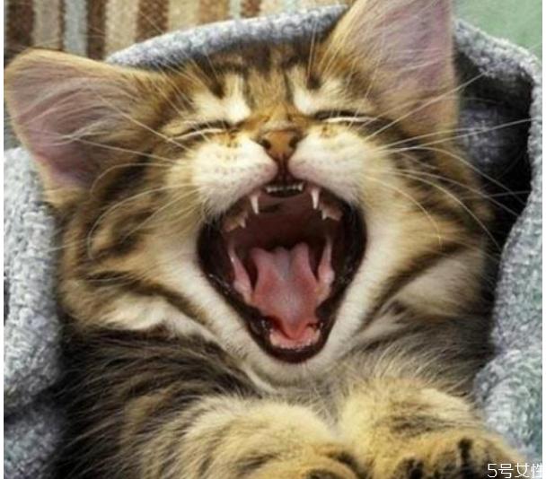 猫咪春节跟着回家好吗 猫咪带回家注意事项