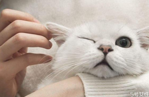猫耳朵需要经常清理吗 猫咪耳屎怎么清理
