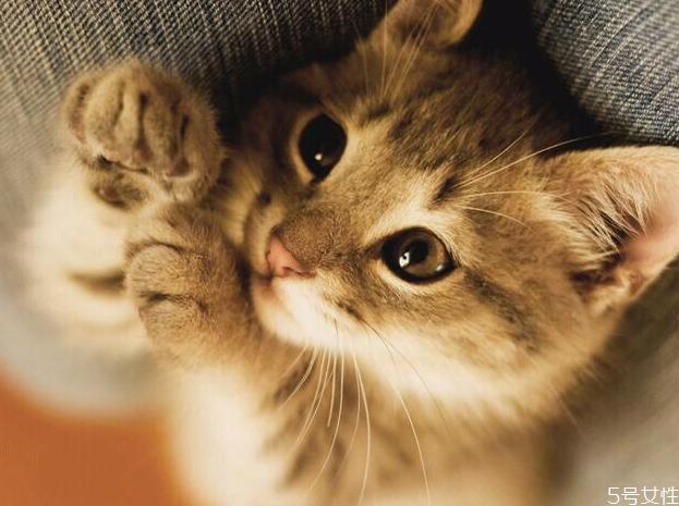 猫口臭正常吗 幼猫口臭怎么办