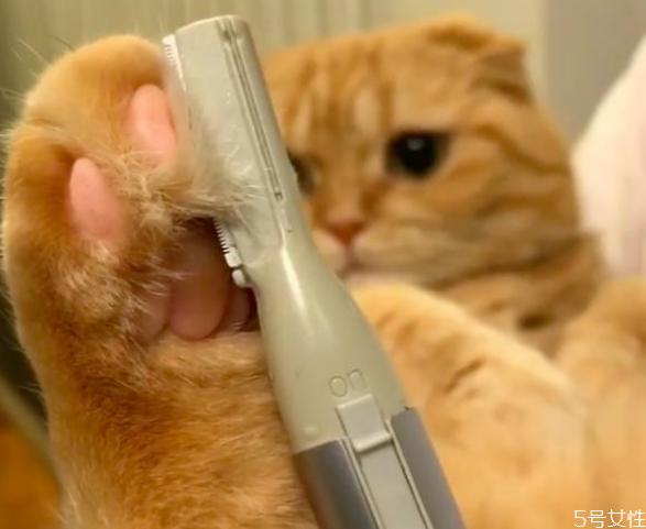 小猫身上脏怎么清理 猫平时怎么清洁