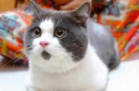 怎么给猫洗澡干净 猫咪洗澡注意事项