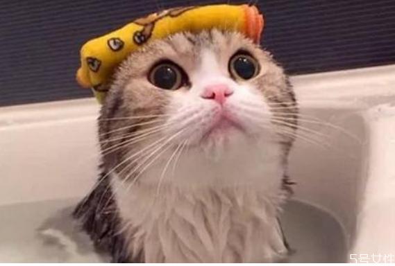 猫洗澡水温在多少合适 猫洗澡发抖会死吗