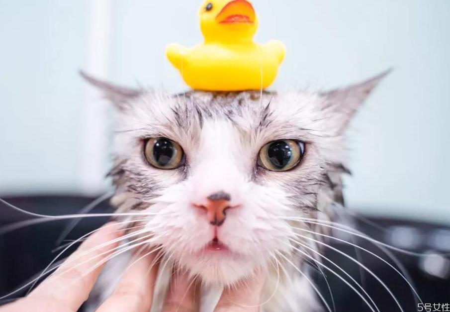 猫咪洗完澡不吹干会死吗 猫洗完澡怎么吹干