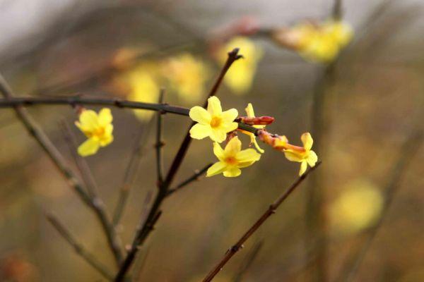 立春如何躲春 立春怎么躲太岁
