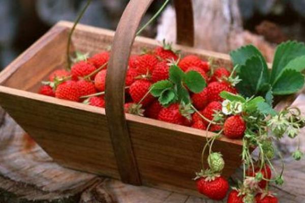 草莓可以放多久 草莓可以多吃吗