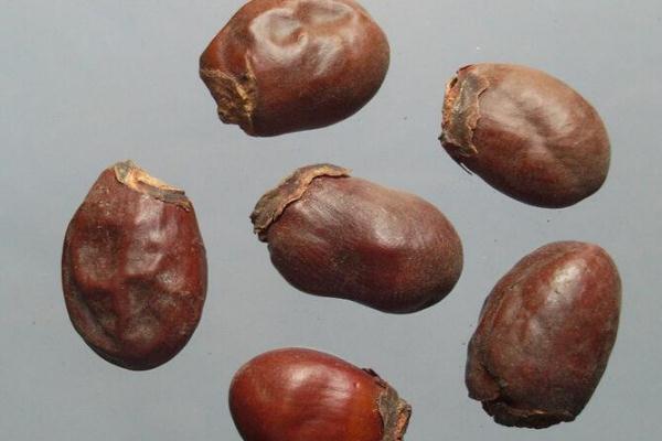 荔枝核怎么服用 荔枝核煮水一般煮几颗合适