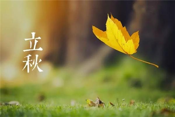 立秋要吃饺子吗 立秋吃饺子还是面条
