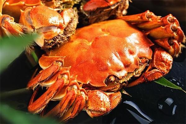 螃蟹可以和柿子一起吃吗 螃蟹与什么相克不能吃