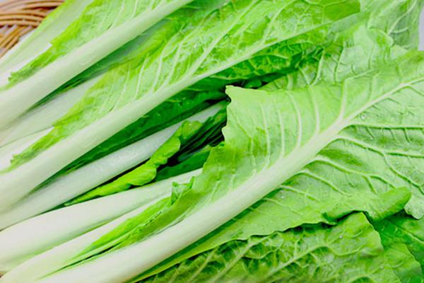 小白菜的热量是多少 小白菜有助于减肥吗