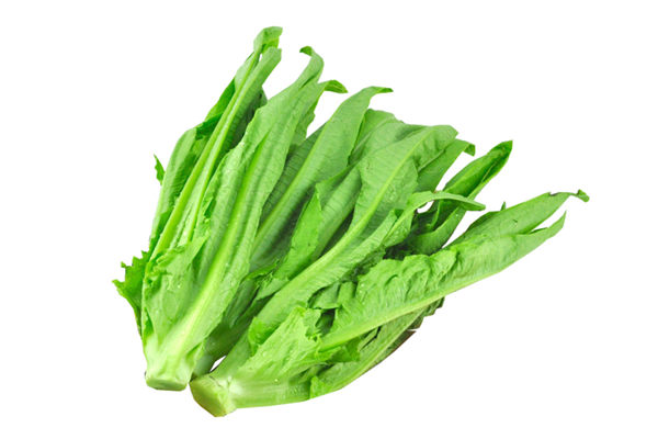 油麦菜是莴苣叶子吗 油麦菜是什么季节的蔬菜